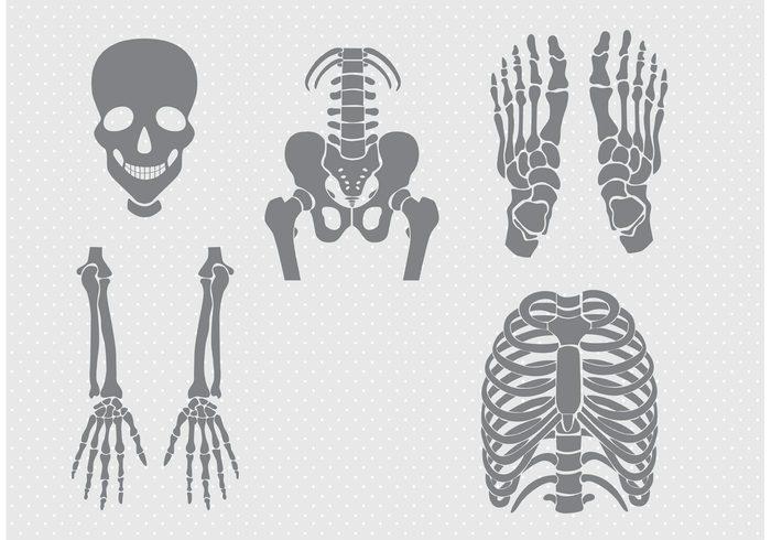 Bones and Joints Vectors