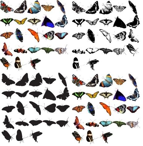 93 Butterflies Vector & Png Clipart Pack