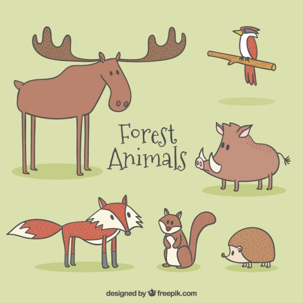 Cute forest animal characters