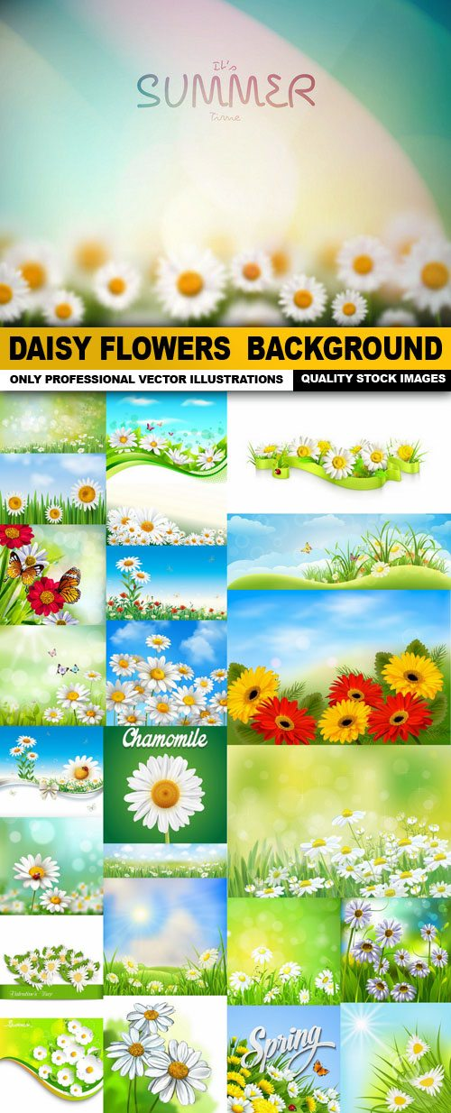 Daisy Flowers Background – 25 Vector