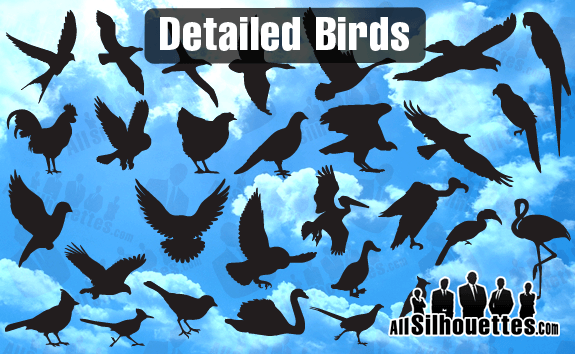Detailed Vector Birds – All-Silhouettes
