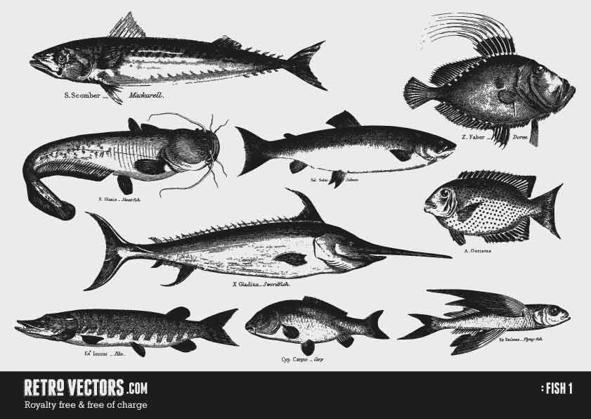 Fish 1 | Free Retro Vectors