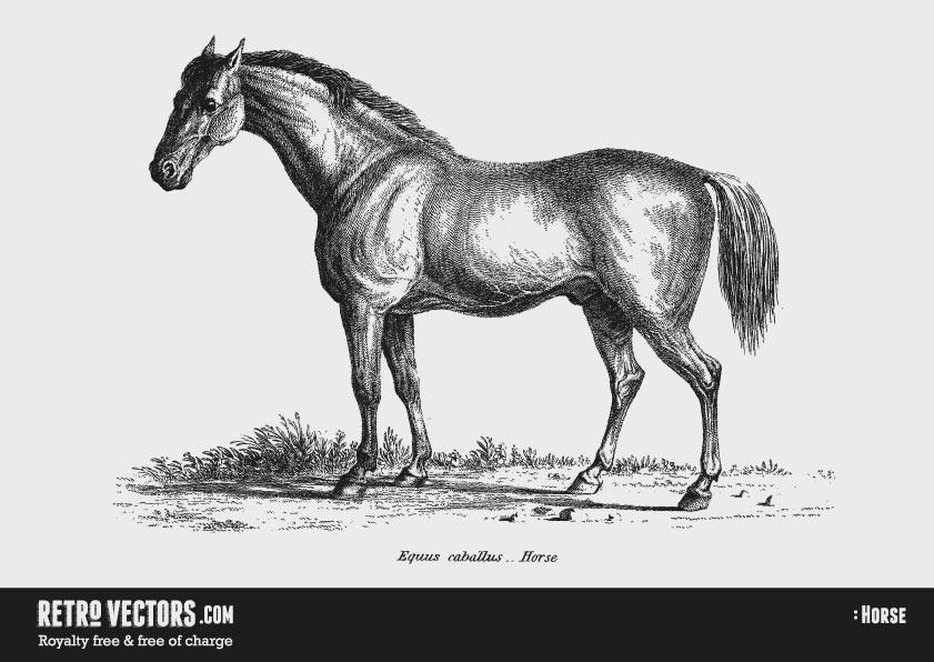 Free Horse Vector