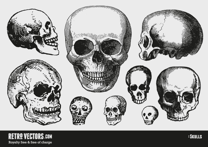 Free Vector Skulls | Vintage Vectors