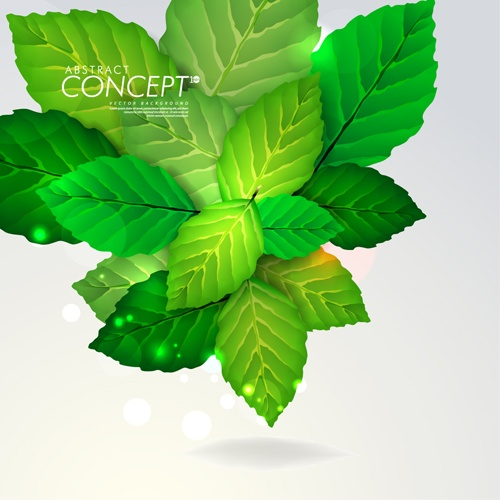 Green leaves design elements cards vector 02