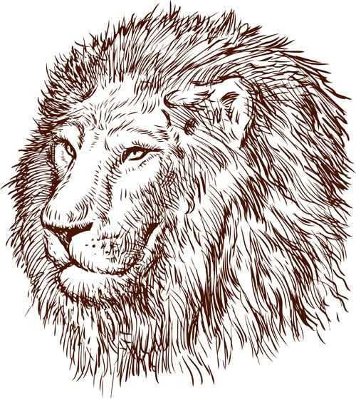 Hand drawing lion vector material 01
