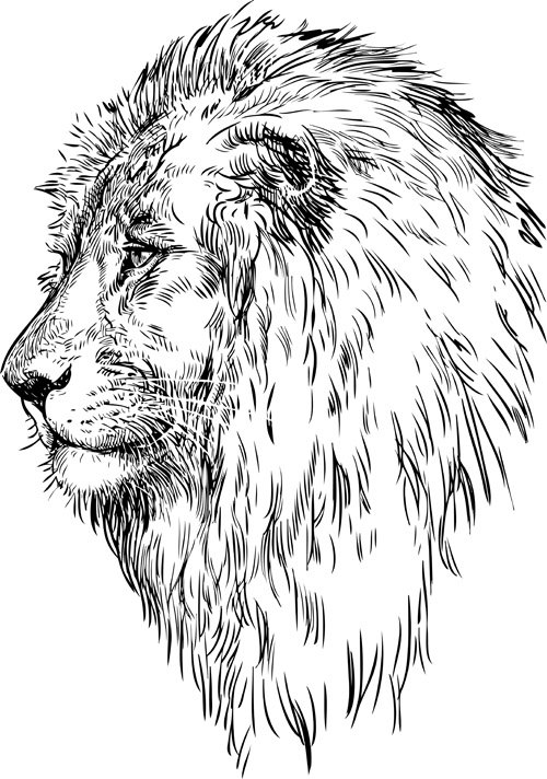 Hand drawing lion vector material 02