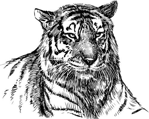 Hand drawing tiger vector material 01