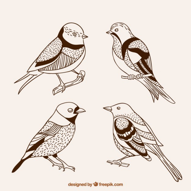 Hand drawn cute birds