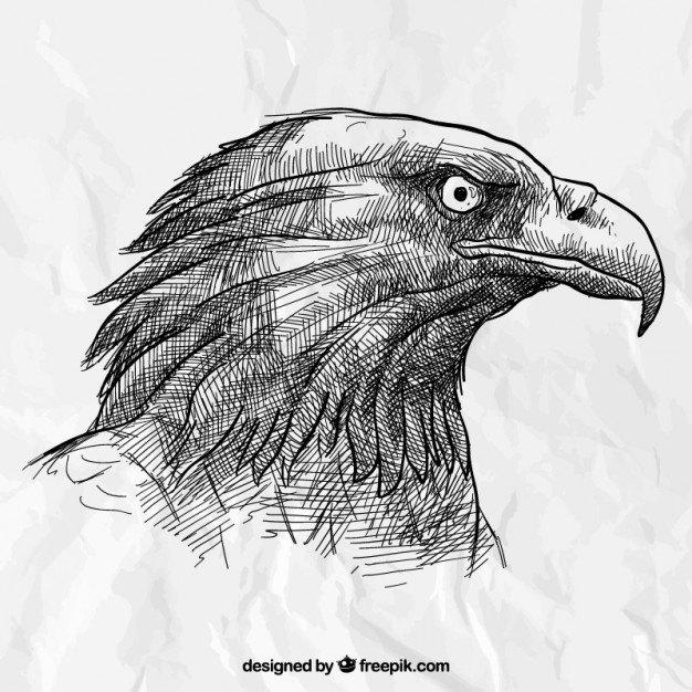 Hand drawn eagle head