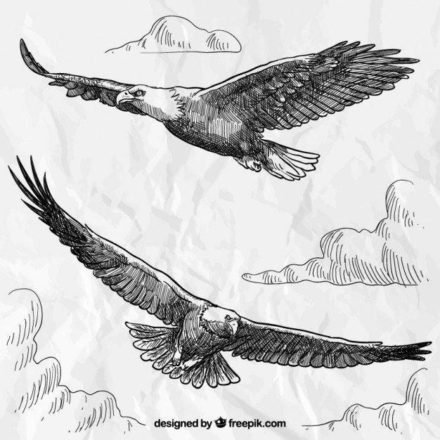 Hand drawn eagles