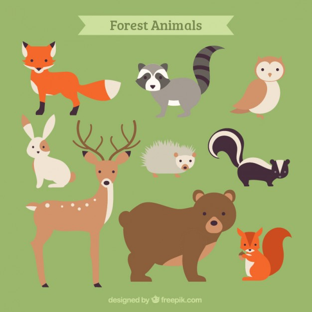 Hand drawn forest animal collection