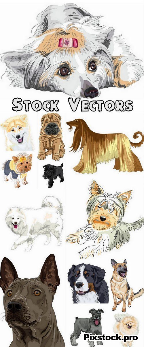 Pets collection #2 – 13 Eps