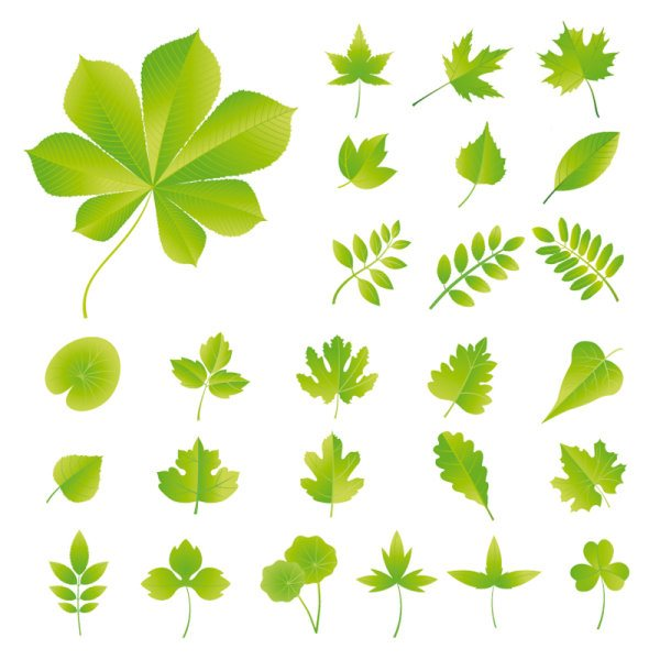 Set of Exquisite Leaves vector Graphics part 03