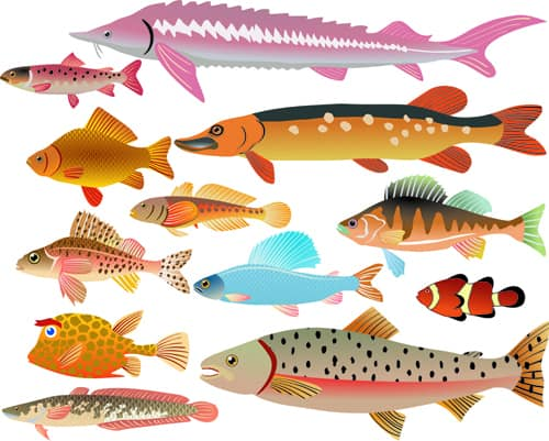 Set of Various Fish vector 03