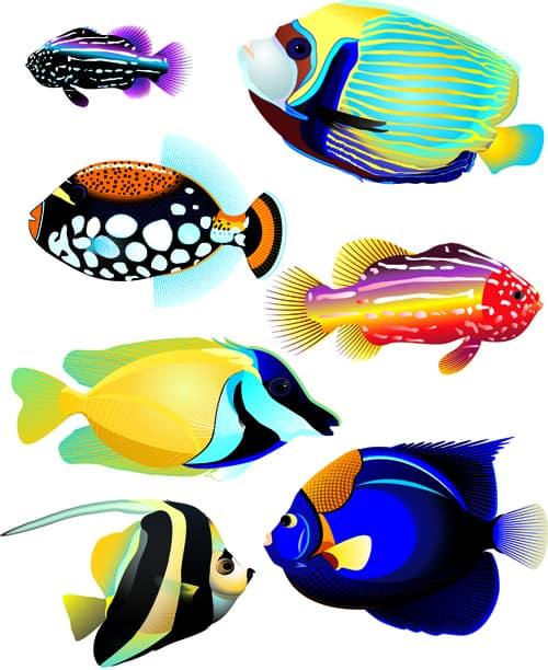 Set of Various Fish vector 01