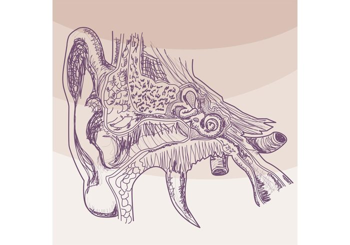 Sketched Hearing Ear Vector