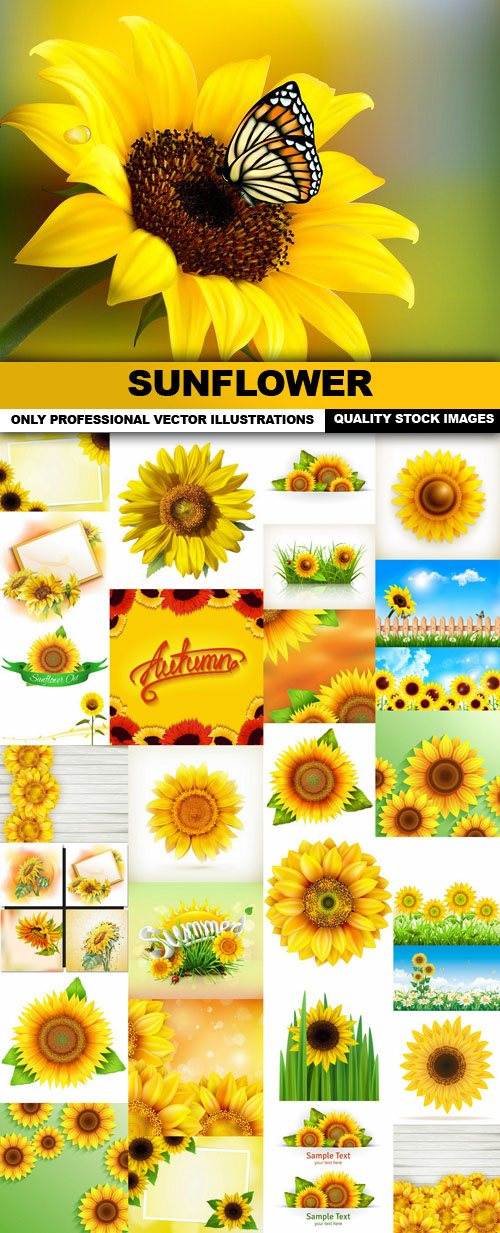 Sunflower , Helianthus – 30 Vector