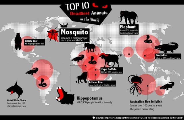 Top 10 Deadliest Animals In The World [Infographic] | Daily Infographic