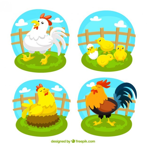 Variety of poultry