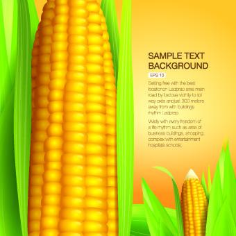 Vector Organic food backgorunds 02