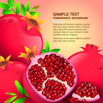 Vector Organic food backgorunds 05