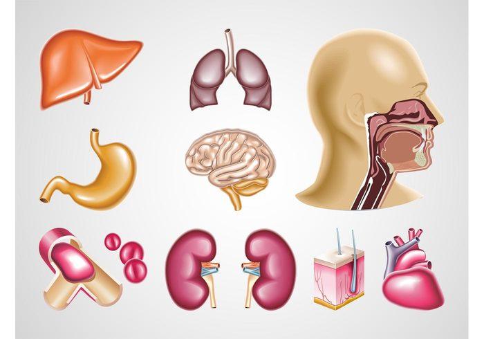 Vector Organs