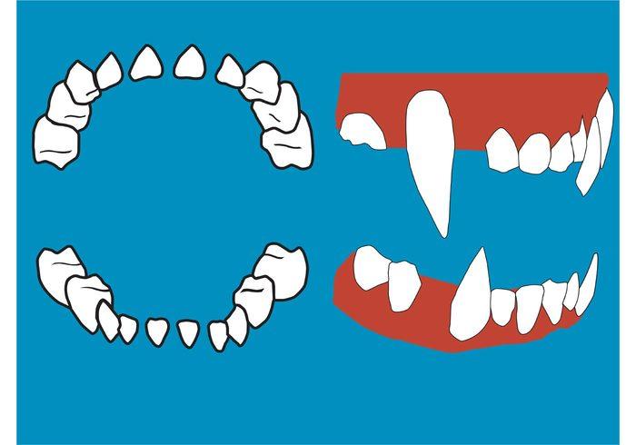 Vector Teeth and Gums