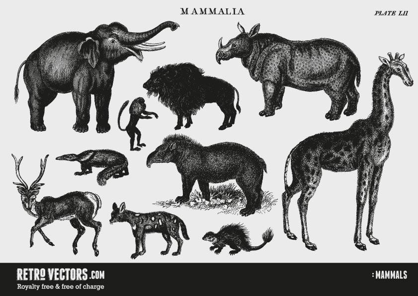 Vintage Animal Vectors