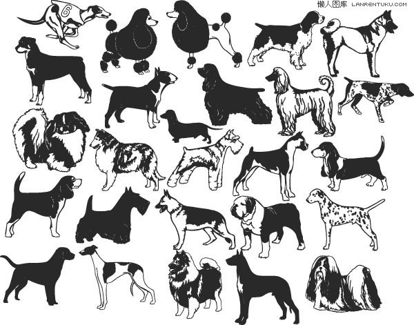 A variety of black and white dog