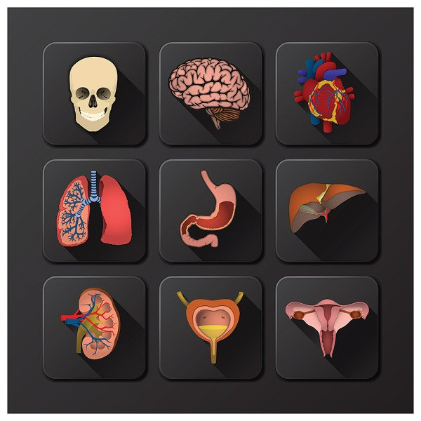 3D icons Internal Organs vector