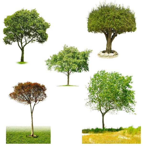 five kinds of trees PSD material