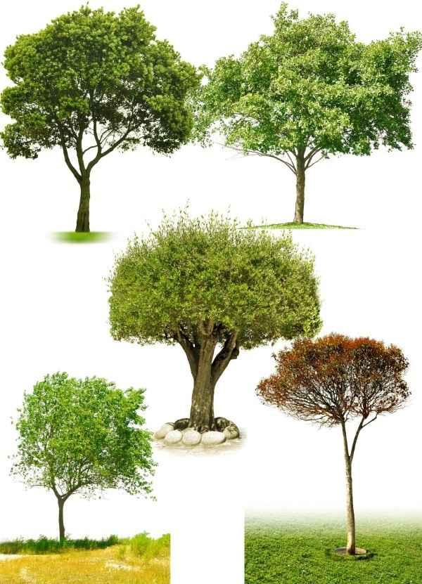 tree, PSD layered