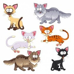 Coloured cats collection Vector | Free Download