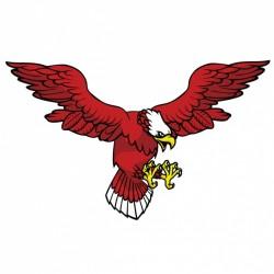 Coloured eagle design Vector   Free Download