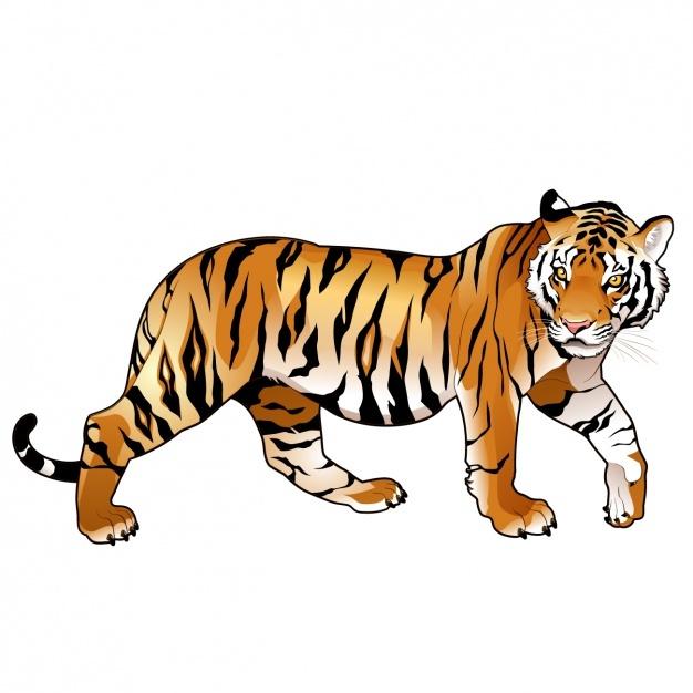 Coloured tiger design Vector | Free Download