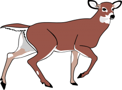 Deer Clip Art – Vector Clip Art Online, Royalty Free & Public Domain – Cliparts.co
