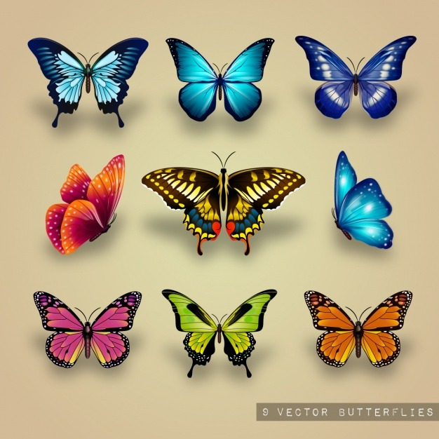 Excellent collection of butterflies Vector   Free Download