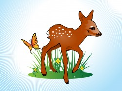 Fawn – Cliparts.co