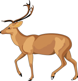 Free Deer Clip Art – Cliparts.co