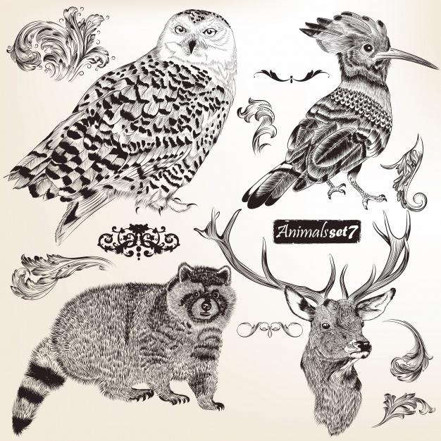 Had drawn animals collection Vector | Premium Download