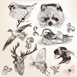 Hand drawn animals collection Vector | Premium Download