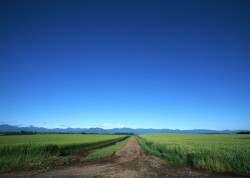 Wheat field road landscape picture material