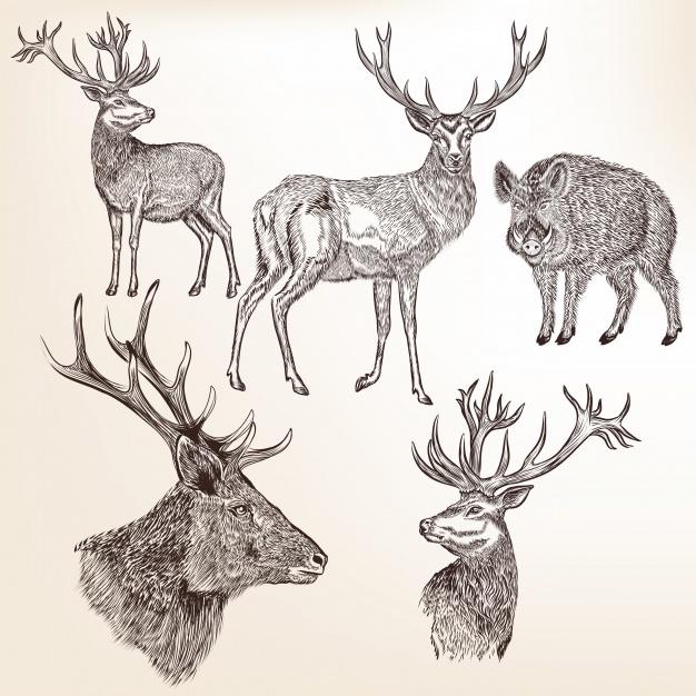 Wild animals collection Vector | Premium Download