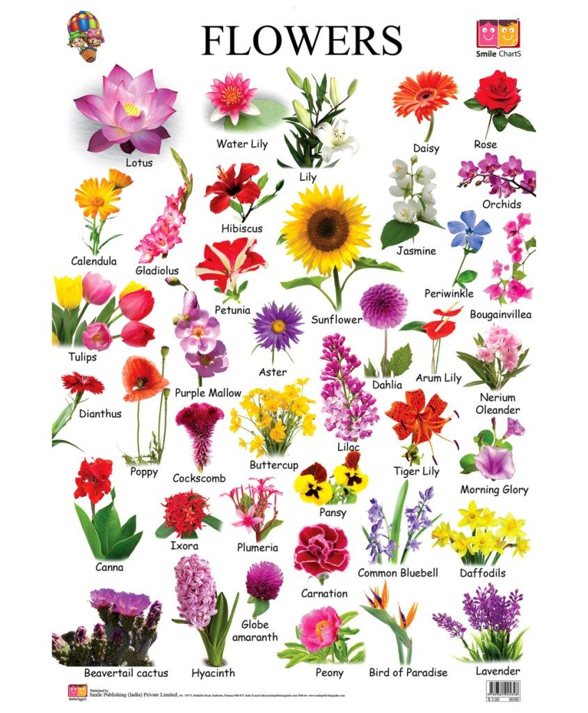 List Of Flower Names And Meanings Flowers Epin Free Graphic And