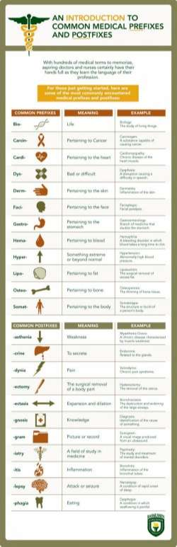 Common Medical Prefixes and Postfixes [Infographic]