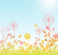 Dandelion flowers vector pictures