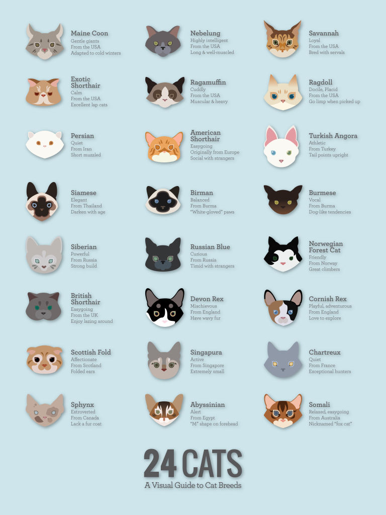 The Best Cat Breeds Visual Guide Funny