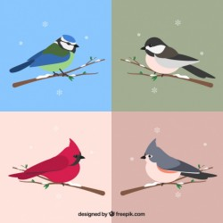 Four cute birds on a branch