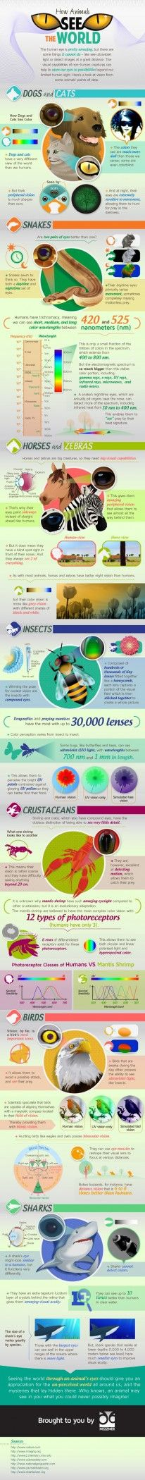 How animals see the world (Infographic)